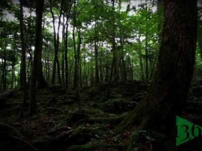 【百物語】2006-2 11~35話 樹海探検/ 桜の樹の下で ほか